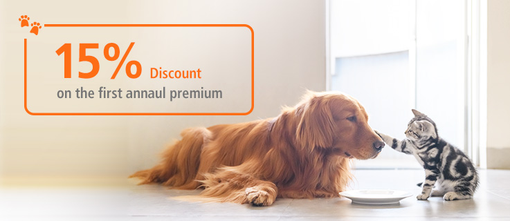 15% Discount on the first annual premium